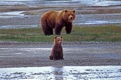 d-kam-bären04